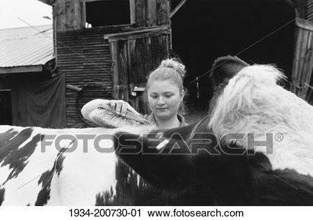 Stock Photography of Young farm girl grooming cow. 1934-200730-01 - Search Stock Photos ...
