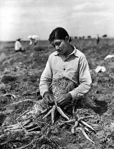 A Mexican-American migrant girl works in a tomato field in Indiana in 1968. | People | Mexican ...