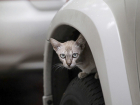 Cats getting stuck in vans: how to prevent feline stowaways