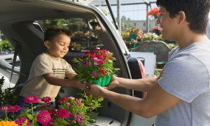 The Van Insurer Highlights Boom in Small Van Popularity