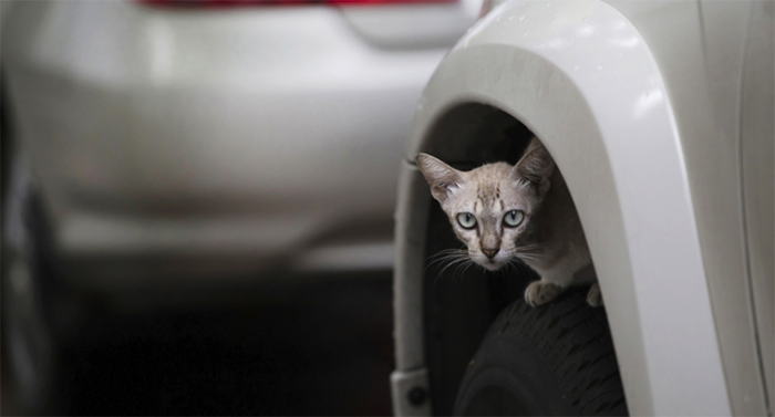 cat-in-a-wheel-arch-header