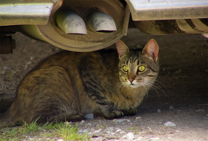 cat-under-a-van-sheltering-header
