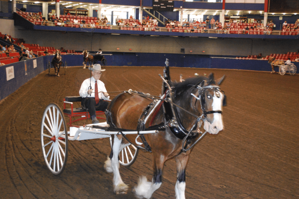 Captain Of Gentle Giants Driving Clydesdales Timber Ridge