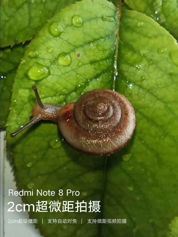 Redmi Note 8 Pro 拍摄样张 - 微距