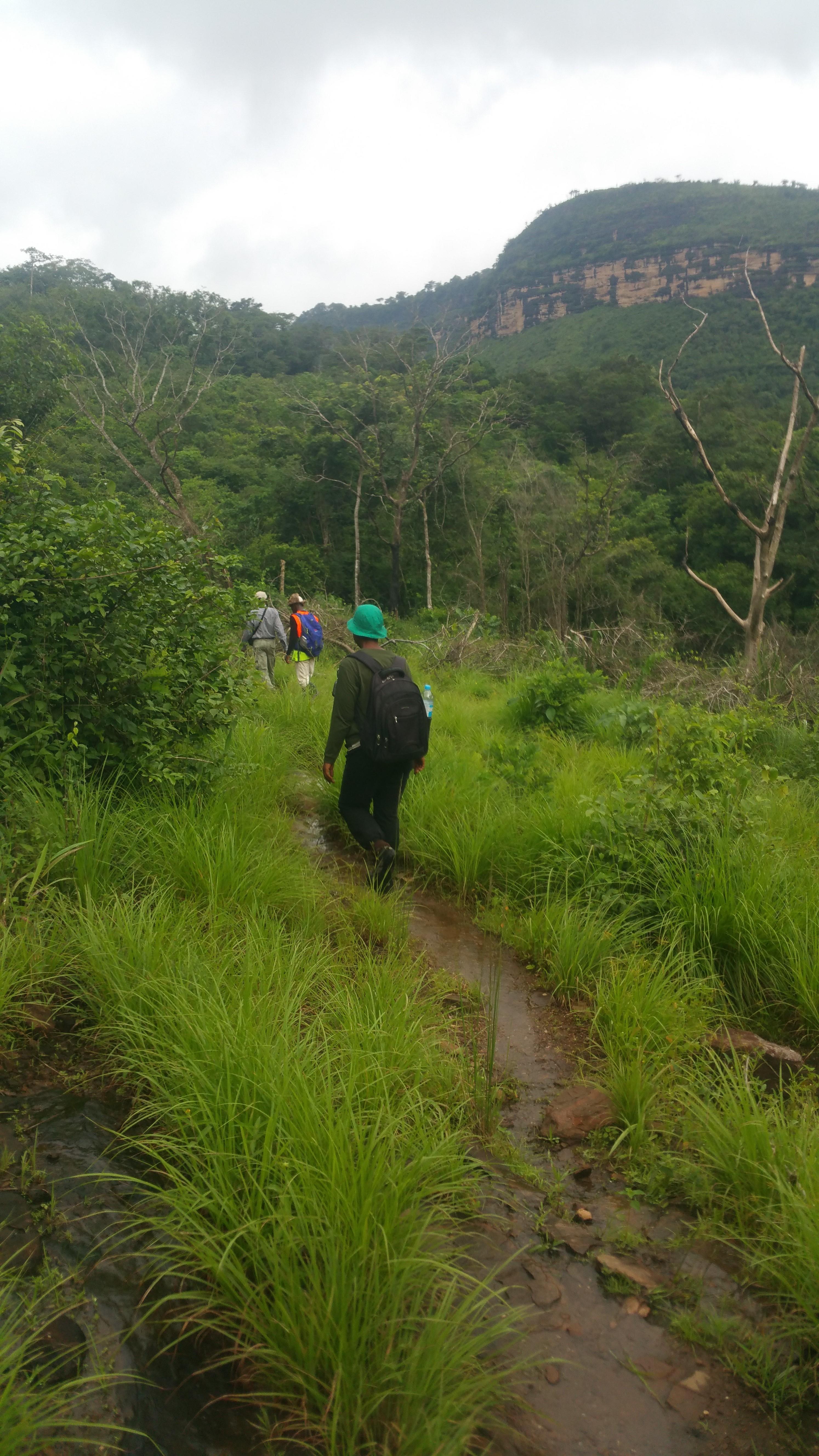 Entering Kakiwondi forest from the Kaporo side. Photo: © C. Couch, RBG Kew