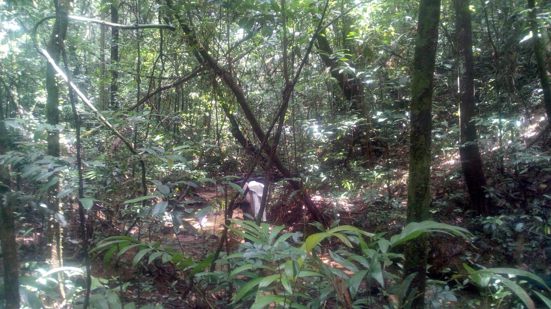 Interior of the Diécké Classified Forest. Photo: ©Pépé Haba