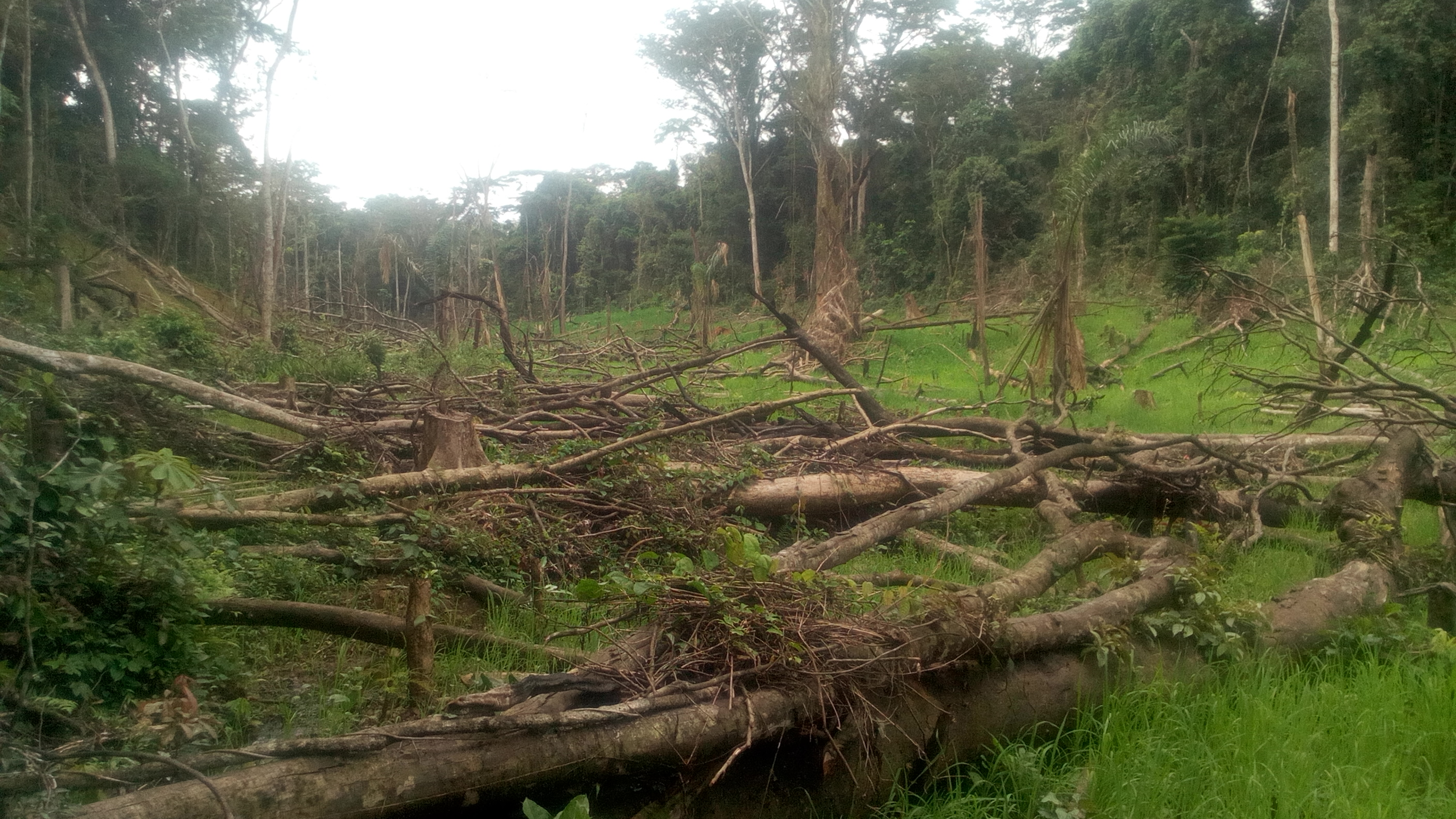 Illegal tree cutting for agriculture. Photo: ©Pépé Haba