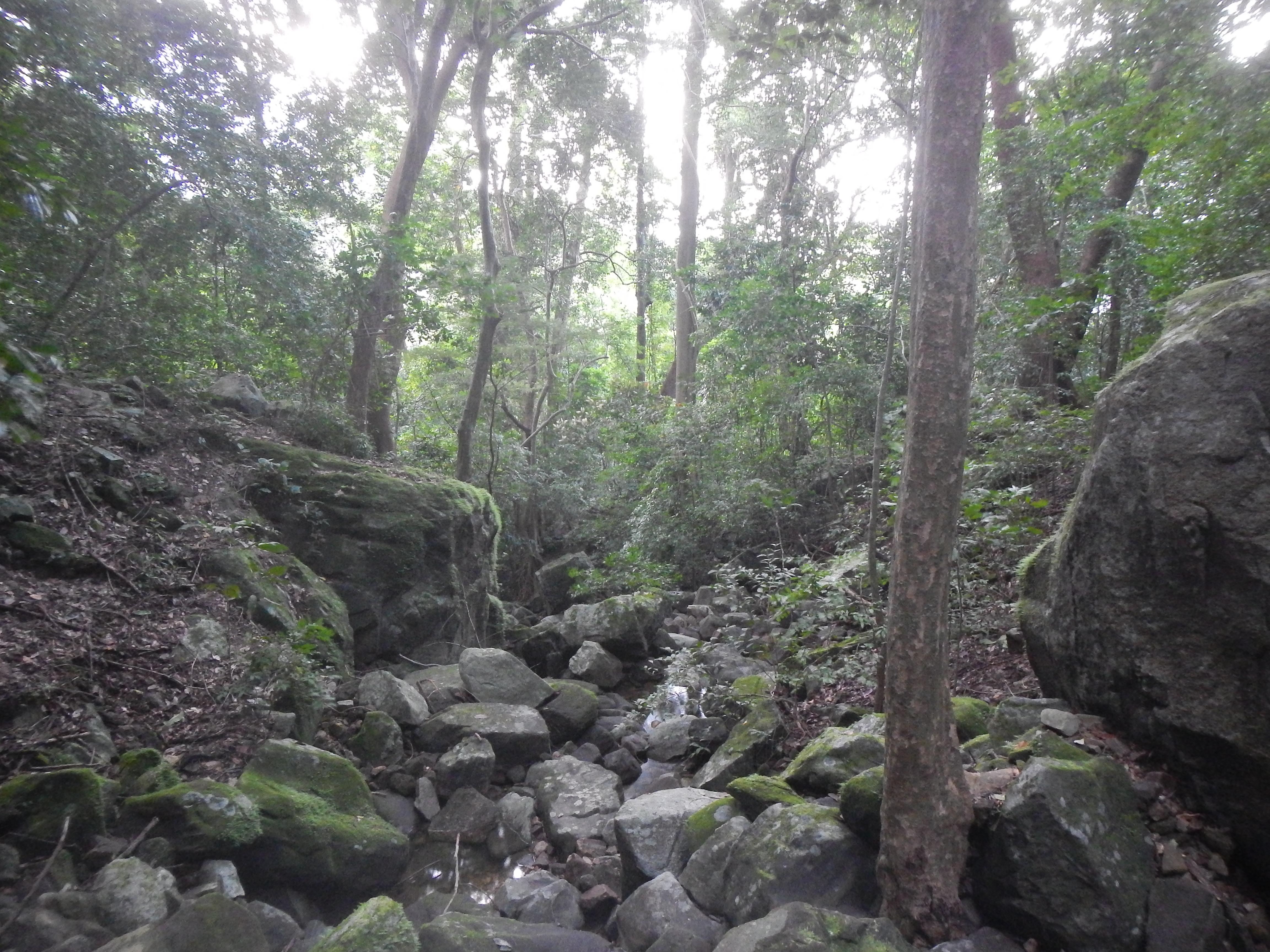 Kounounkan forest near Samayah (Photo: © Xander van der Burgt, RBG Kew)