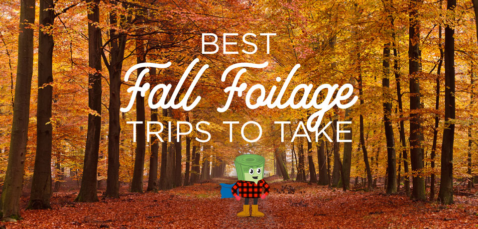 Best Fall Foliage Road Trips To Take