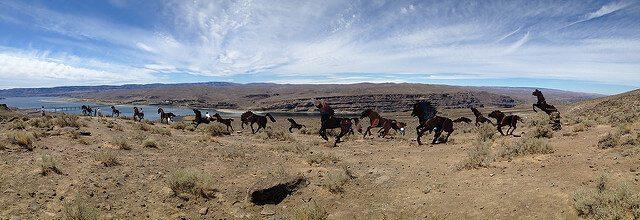 Wild Metal Horses Monument — Vantage, Washington