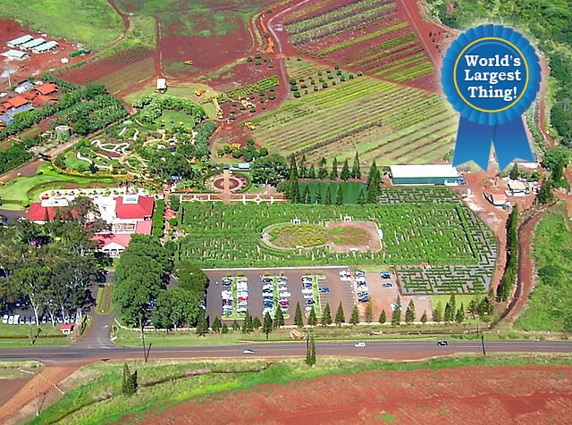Dole Plantation Pineapple Maze — Wahiawa, Hawaii