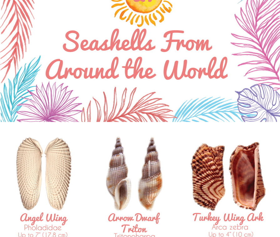 Shell Guide from all around the world