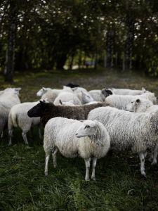 lampaita ulkona