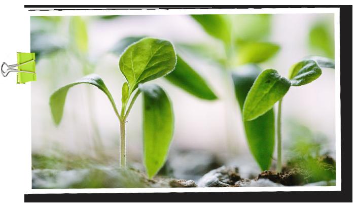 Piha & Koti -kasvi