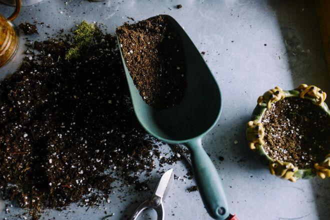 Kuvassa puutarhalapio