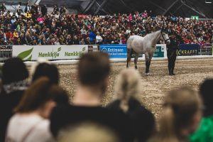Hevonen ja ratsastaja keskellä Hankkija-areenaa