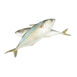 Fresh Mackerel (Bagha) - 500 g