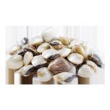 Fresh Clams - 500 g