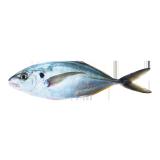 Medium Fresh Hamam - 500 g