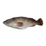 Small Fresh Hamour - 500 g