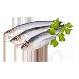 Fresh Sardine - 1.0 kg