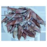 Fresh Squid - 1.5 kg