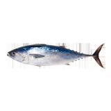Fresh Tuna - 500 g