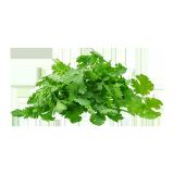 CORIANDER GREEN LEAVES - 1 bundle