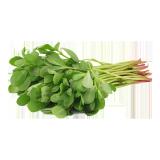 REGILA GREEN LEAVES - 1 bundle