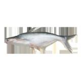 Fresh Cat Fish - 500 g