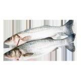 Fresh Sea Bass - 500 g