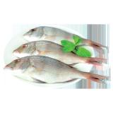 Medium Fresh Andak Fish - 500 g
