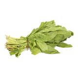 GREEN SILK LEAVES - 1 bundle