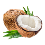Coconut - 1 count