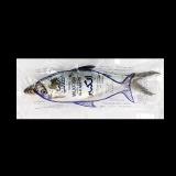 Milk Fish - 10K