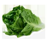 Romaine Lettuce - 1.0 kg
