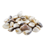 Fresh Clams - 500 g