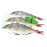 Medium Fresh Andak Fish - 500 g