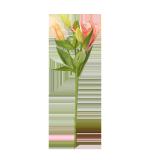 Fresh Lilium - 1PCS