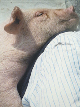 Tatsumi Orimoto, 'Carrying a Baby Pig on My Back' (2012) (partial)