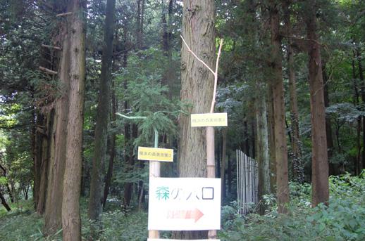 隣接するY150(ヒルサイド)を意識した入り口サイン
