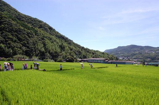 小豆島は舞台となる島の中では最も面積が広く、その魅力を作品巡りと合わせて楽しむにはレンタカーをかりて1泊するのが得策。美しい棚田の風景を堪能できる肥土山・中山エリアでは、あぜ道や山道を歩くことになります。