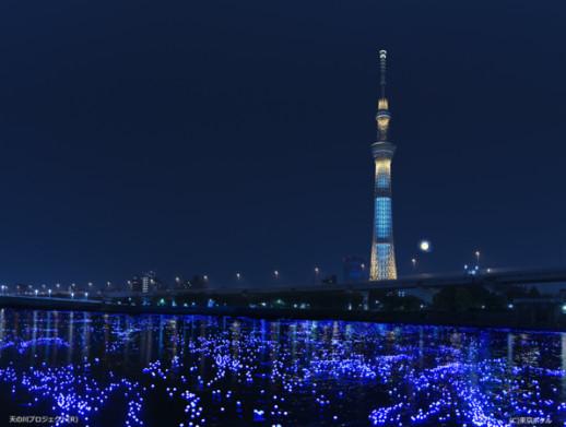 『東京ホタル』