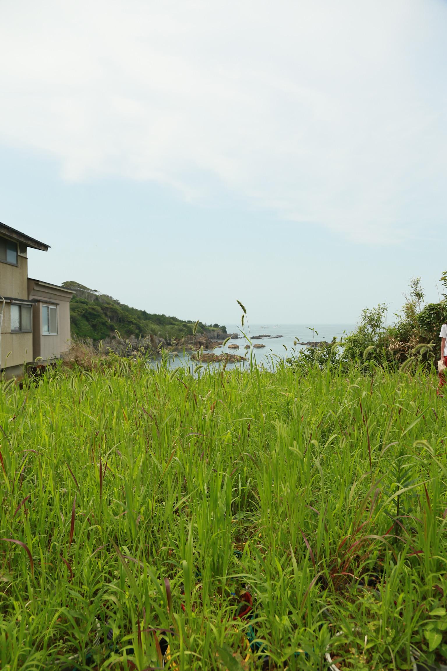 カラフルなポリバケツに入った雑草。力強く伸びている。作品のすぐ隣は崖になっており美しい海と島の岩肌が見える