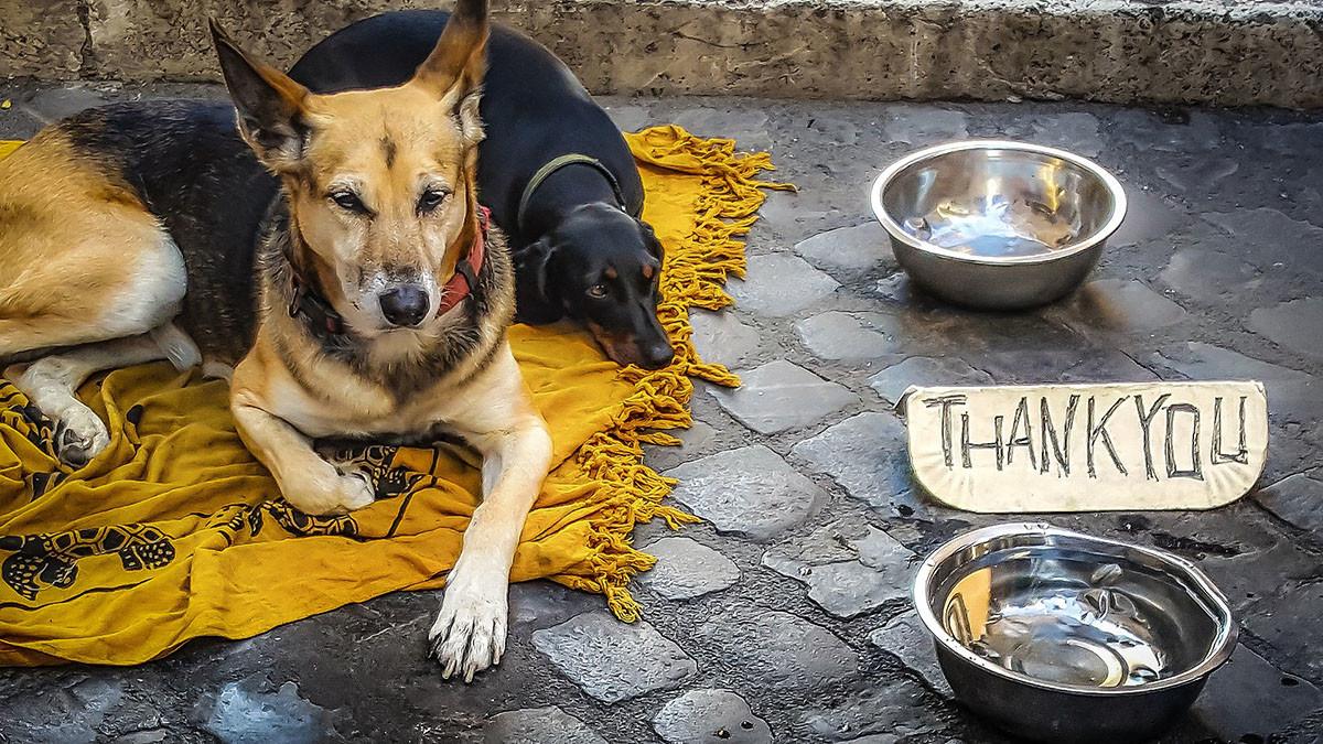 mendigo con perro pidiendo dinero