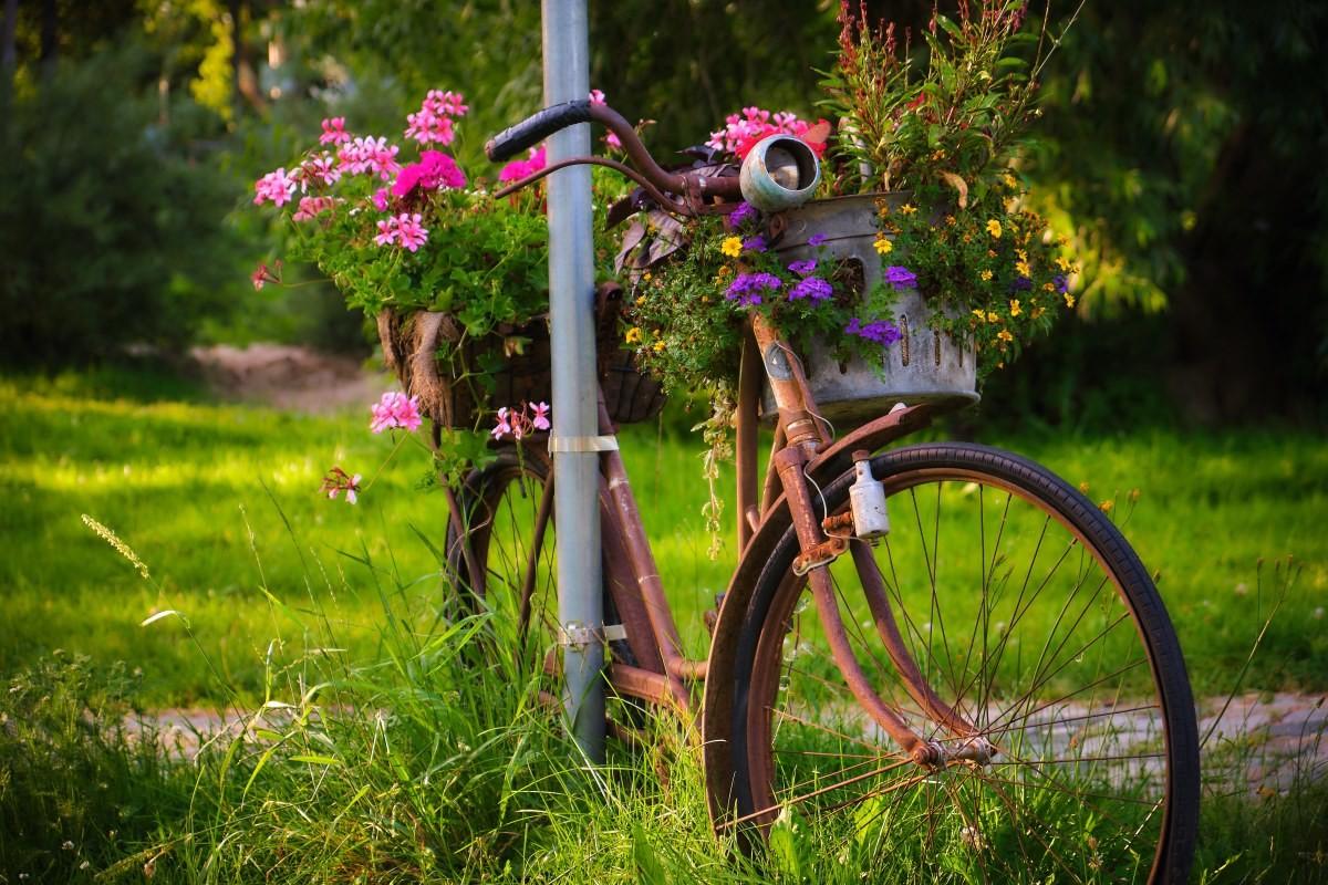 rusty bike in the park
