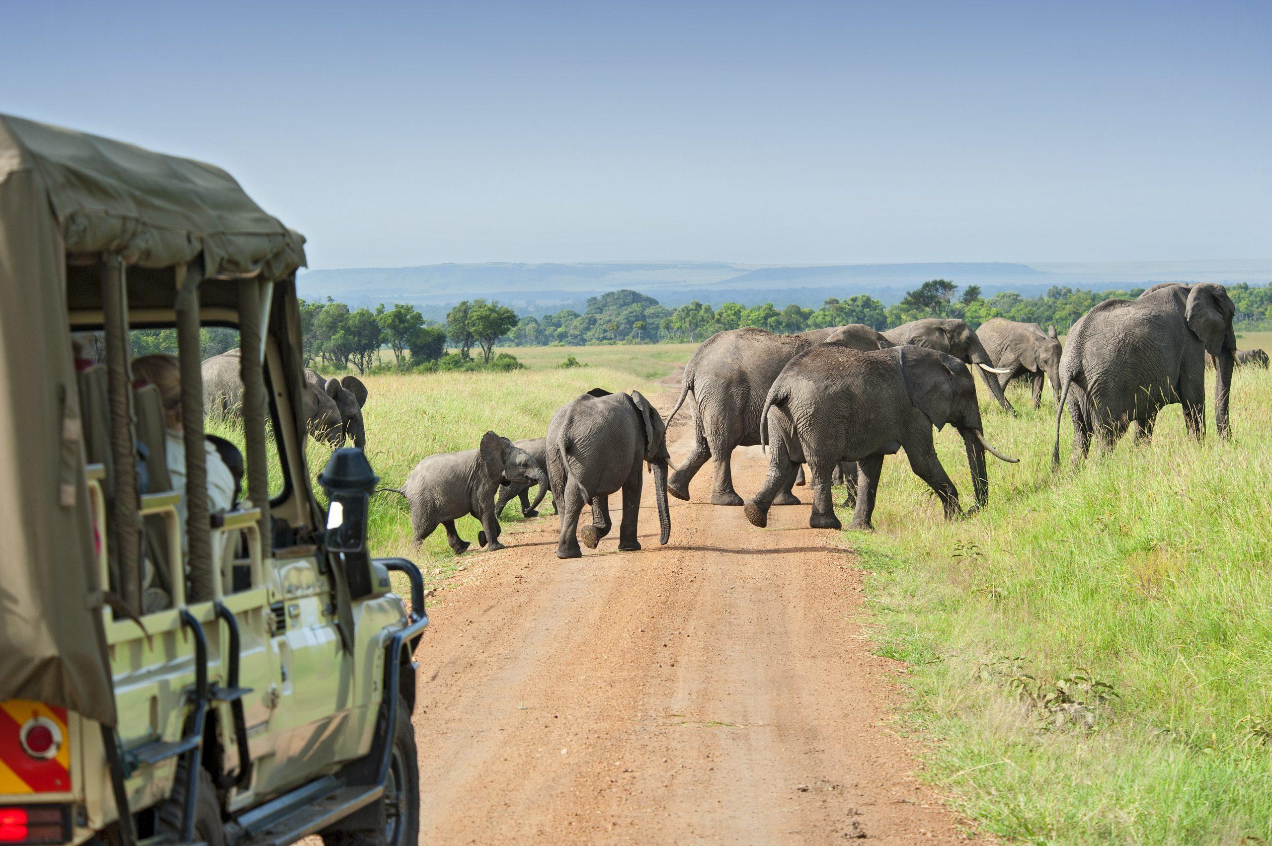 Luxury African Safari Tours for Seniors
