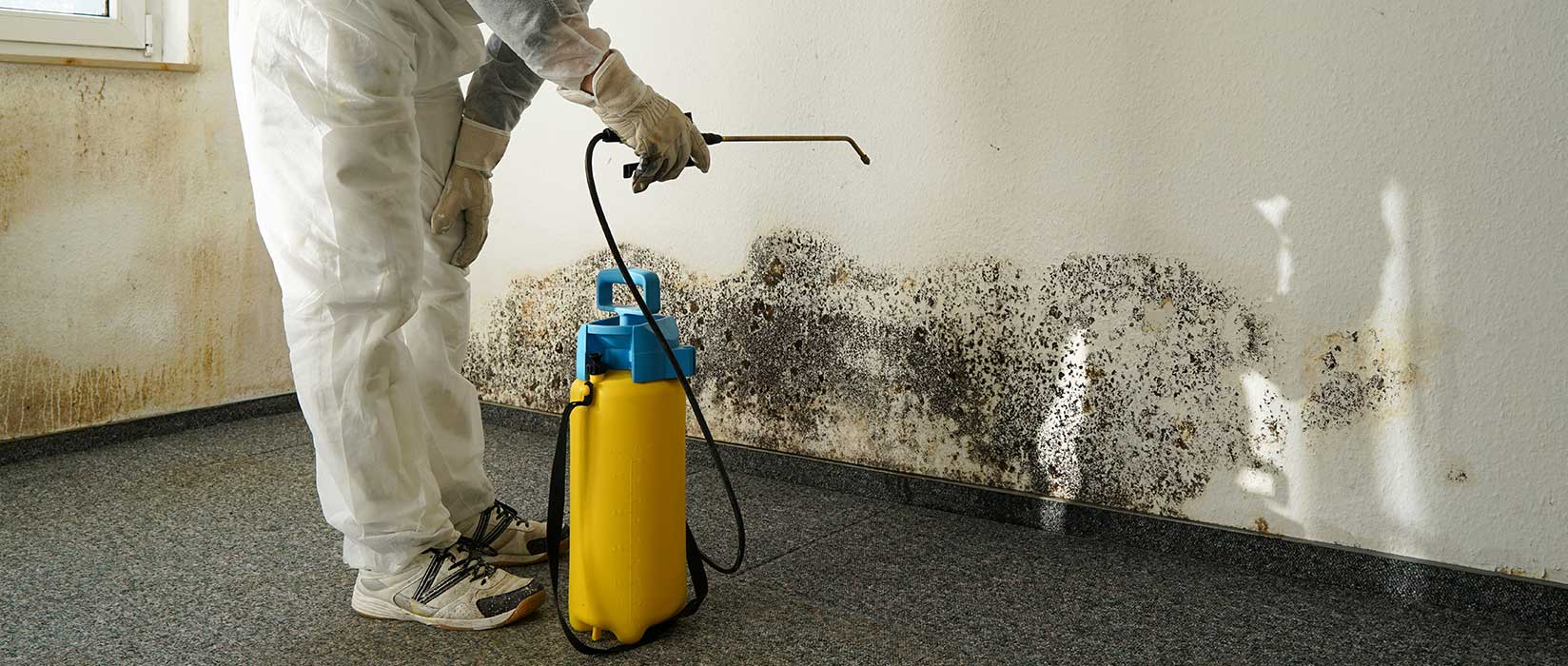 Spotting and Dealing with Mold in Your Home