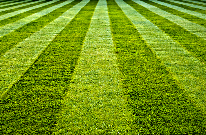 How to Find Affordable Lawn Care Services