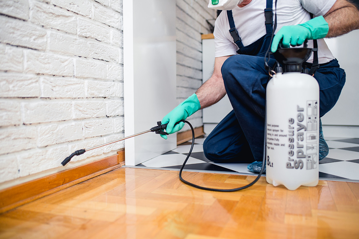 Keep Your Home Safe From Pests